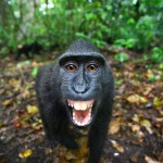 Meet the Monkeys (Natural World)