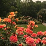 In 2012, the garden was honored with the Award of Excellence by the World Federation of Rose Societies, recognizing it as one of the best rose gardens in the world.