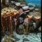 Rugose corals and trilobites, diorama depicting Devonian period of Central New York