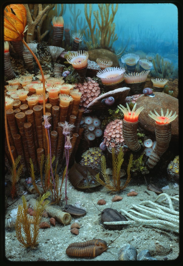Diorama In Pictures The Coral Reef Archive Pbs Digital