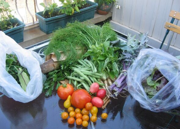 Eat Inside the Box. Find Community Supported Agriculture.