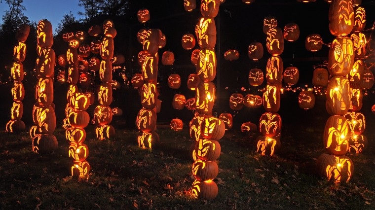 Q&A: The Life and Times of a Pro Pumpkin Carver