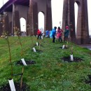 Erik Baard, along with a coalition of green groups, planted 50 endangered apple trees on Randall's Island on Wednesday. Baard has