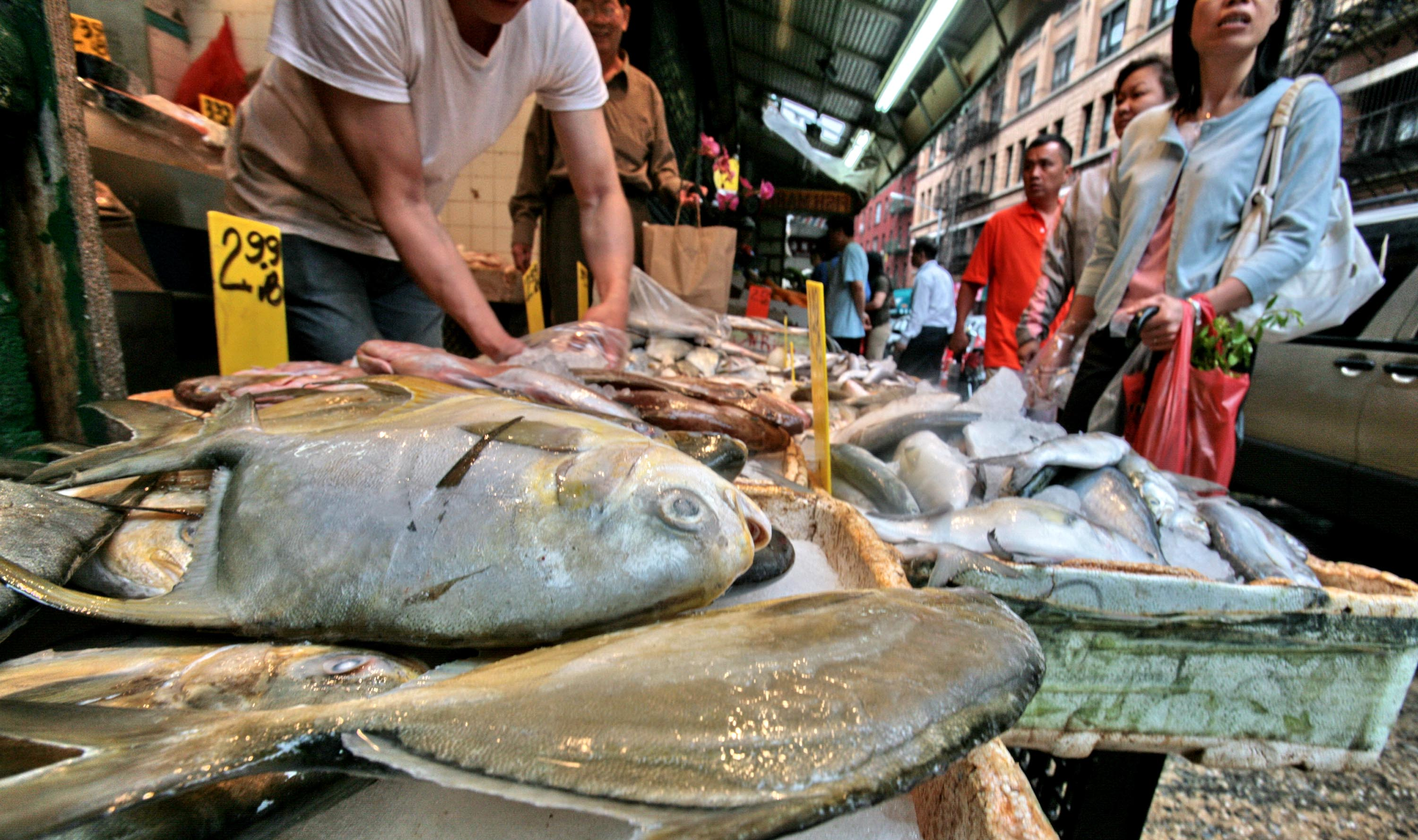Fresh fish where and when to get the best catch in nyc for Seafood fish market