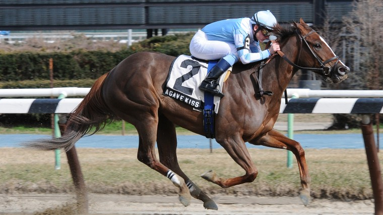 Horse Racing: A Rare Growth Industry for NY