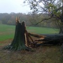 A tree felled by Hurricane Sandy winds at the Long Meadow of Prospect Park, before 4:45 p.m. on Monday afternoon, before the height of storm. Photo by Marc Rosenblatt.