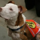 An adoptable pet who visited City Hall in 2010 for the announcement of a major grant to the Mayor's Alliance for NYC's Animals, a coalition of more than 160 animal rescue groups and shelters that work with Animal Care & Control of NYC. Image courtesy of City Limits.
