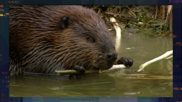 Full Episode May 8: Crime in Camden, Leave it to Beavers, Scuba Diving in Brooklyn