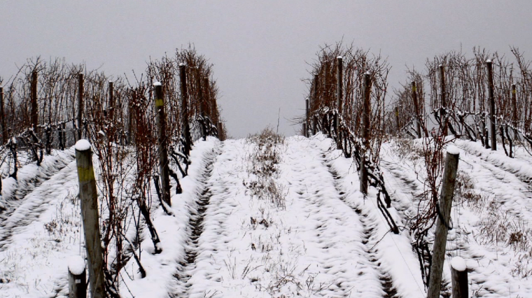 Finger Lakes Wineries Hit Hard by Polar Vortex