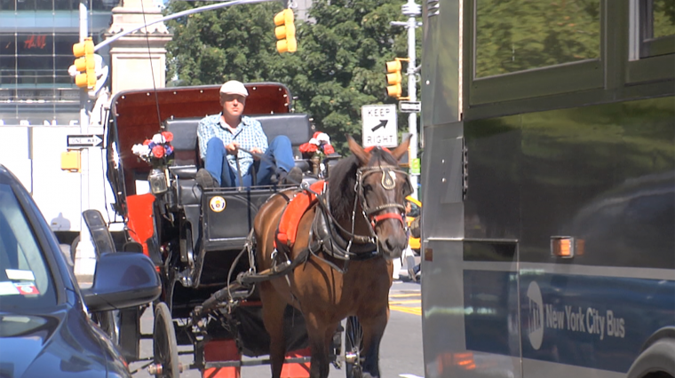 Two Sides Of The NYC Horse Carriage Ban Debate