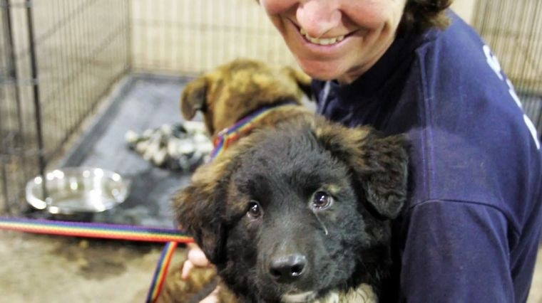 American Humane Association: 100 Years of Animal Rescue