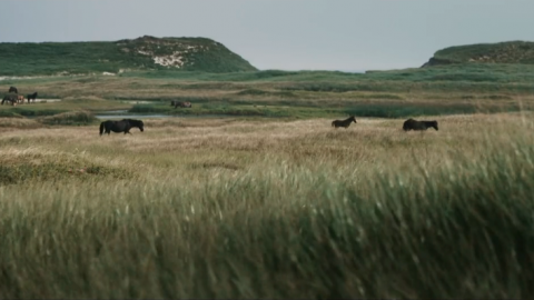 STRONGHOLD OF RESISTANCE: SABLE ISLAND & HER LEGENDARY HORSES