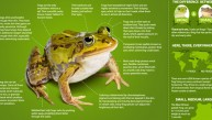 allaboutfrogs-featured