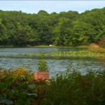 A lake in the Staten Island Greenbelt. Photo courtesy of NYC Media.