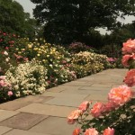The Rose Garden was originally designed and created in 1916, and was completed in 1988.
