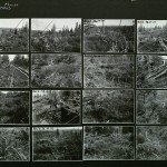 """Alaska forest, field photographs for use in Alaska Moose Group, Hall of North American Mammals,"" (1930-1940), AMNH Digital Special Collections."