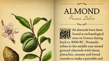small_almond